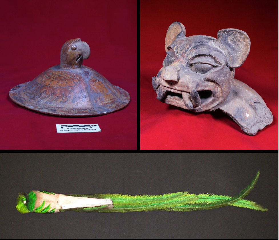 Maya Mammals (and more!)